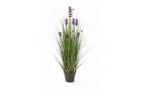 Lanvender Grass 120cm