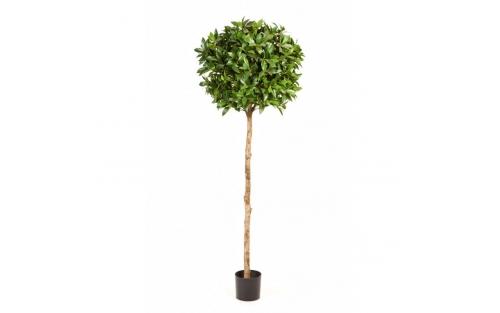 Laurel Tree de Luxe 120cm