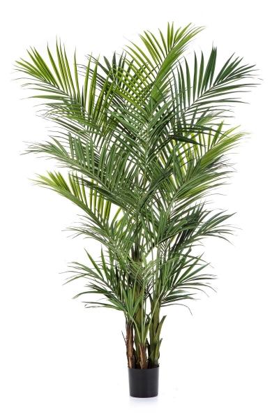 Palm de Luxe 260cm