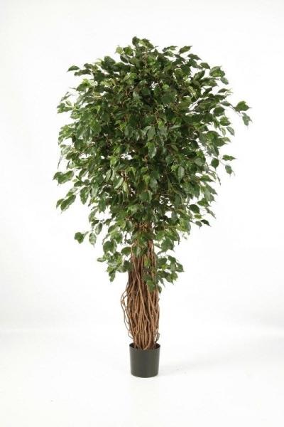 Ficus de Luxe 240cm