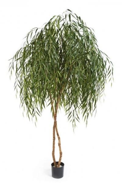 Willow Tree 240cm
