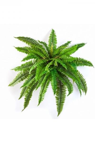 Fern Plant 45cm