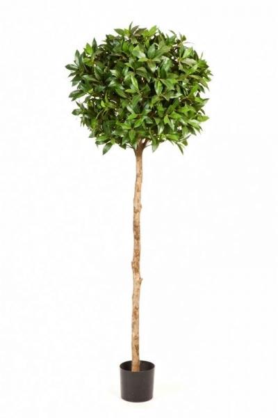 Laurel Tree de Luxe 150cm